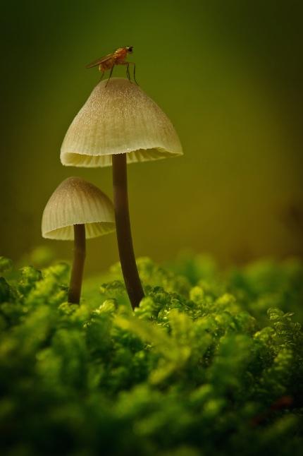 1e plaats publiekjury, categorie planten en fungi; Olaf Oudendijk