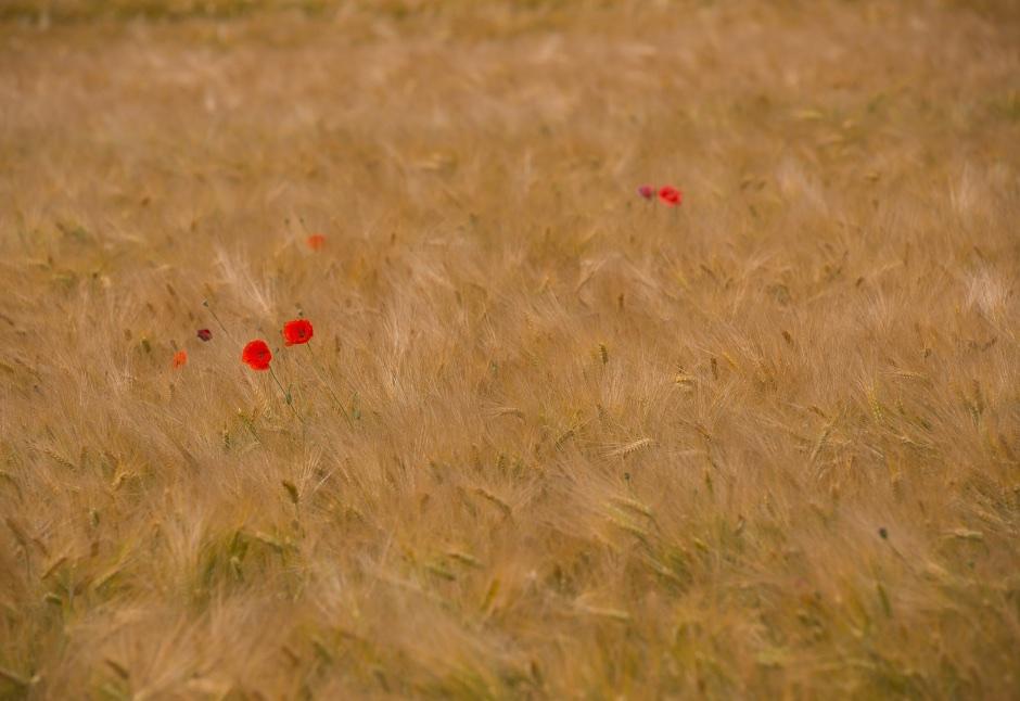 3e plaats publiekjury, categorie planten en fungi; Fred van den Bosch
