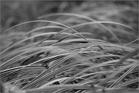 fredvandenbosch-1