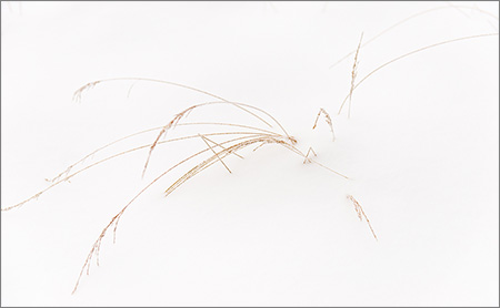 fredvandenbosch-2